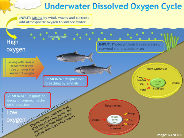 Underwater Dissolved Oxygen Cycle