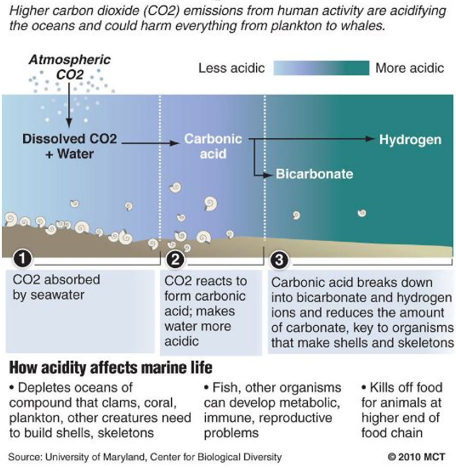 Diagram of ocean acidification