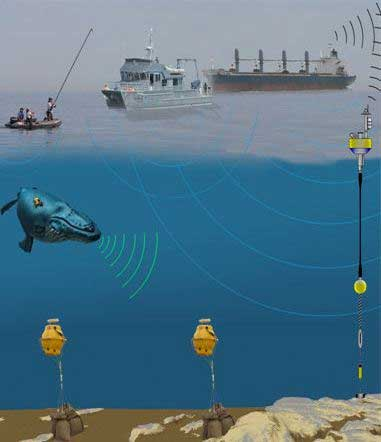 Illustration of passive acoustic monitoring system for marine mammals (Credit: Michael A. Thompson, SBNMS)